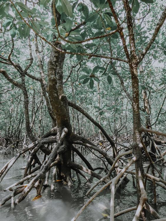 Langkawi Mangroven Kajak Tour – Ganz Privat!