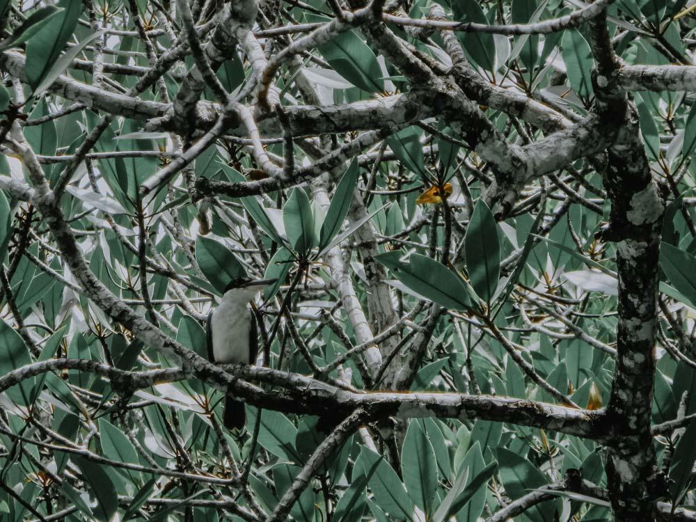 Mangroven Langkawi