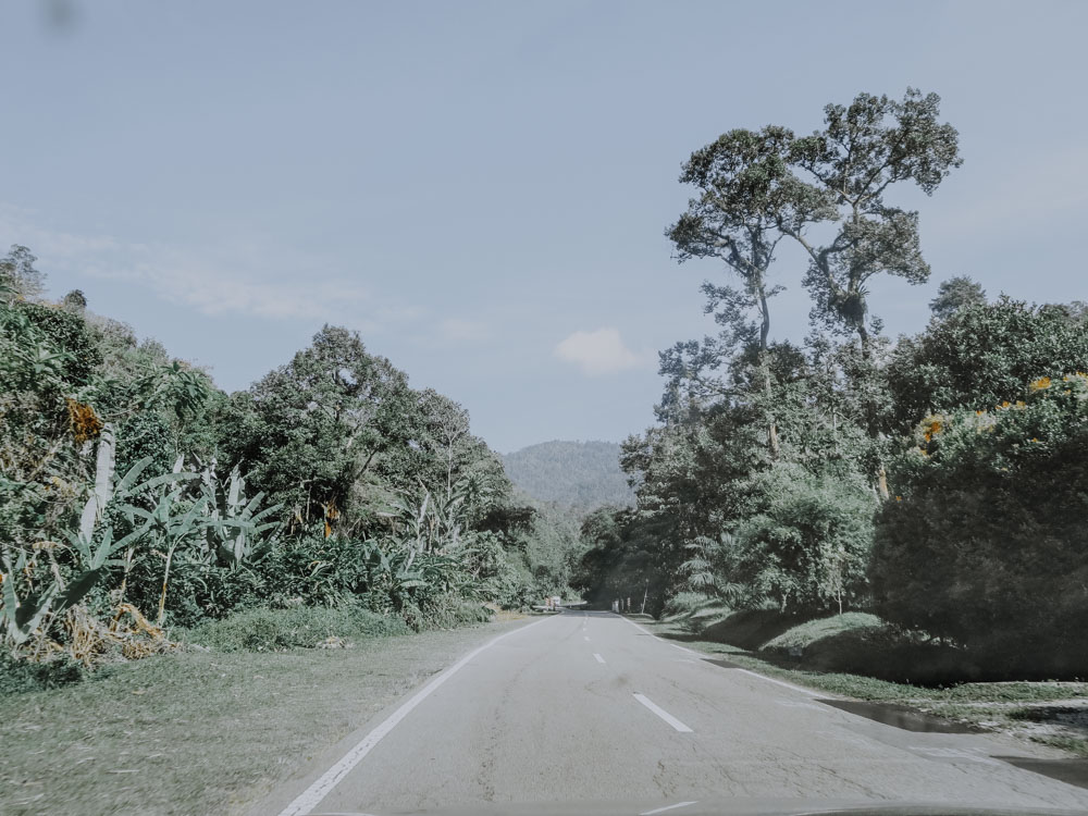 Road to Cameron Highlands