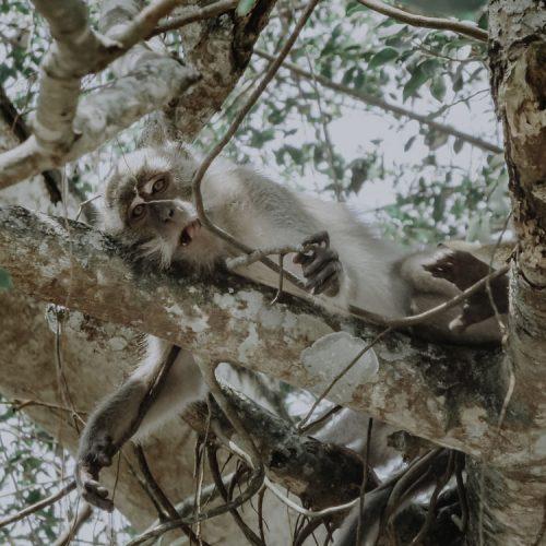Kuala Selangor Nature Park - Malaysia off the beaten Track