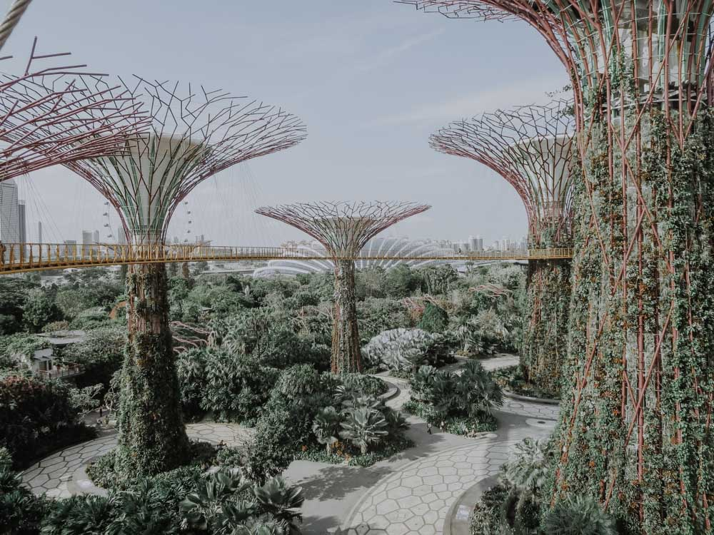 Supertrees and Gardens by the Bay
