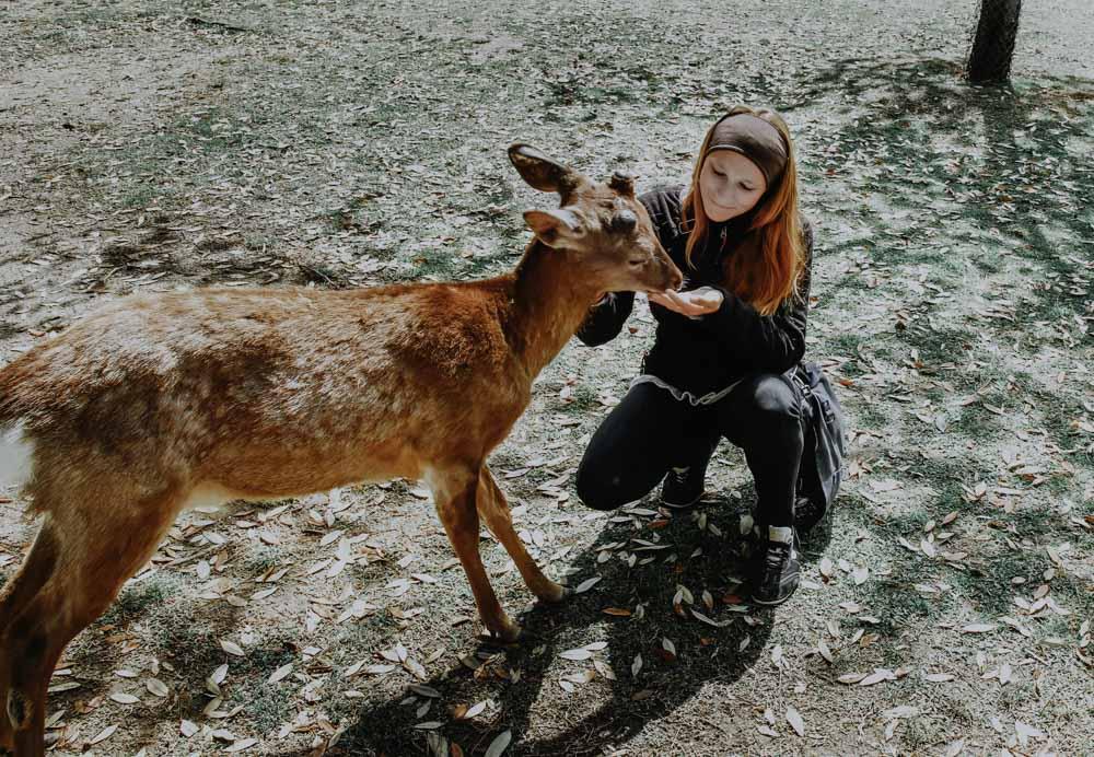 Hirsche und Rehe im Nara Park in Japan