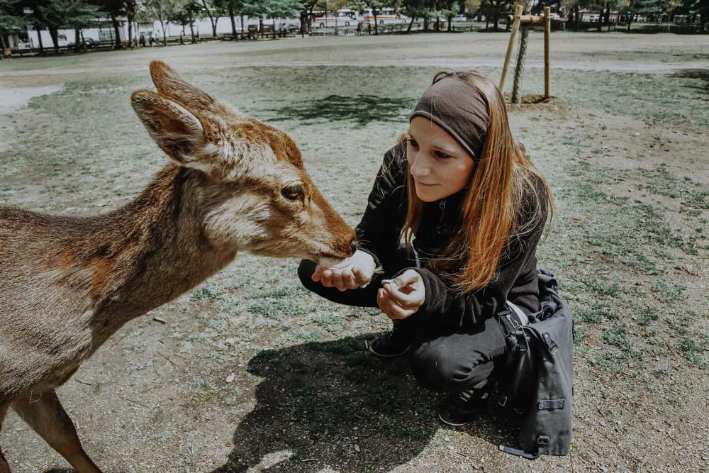Rehe und Hirsche im Nara Park in Japan