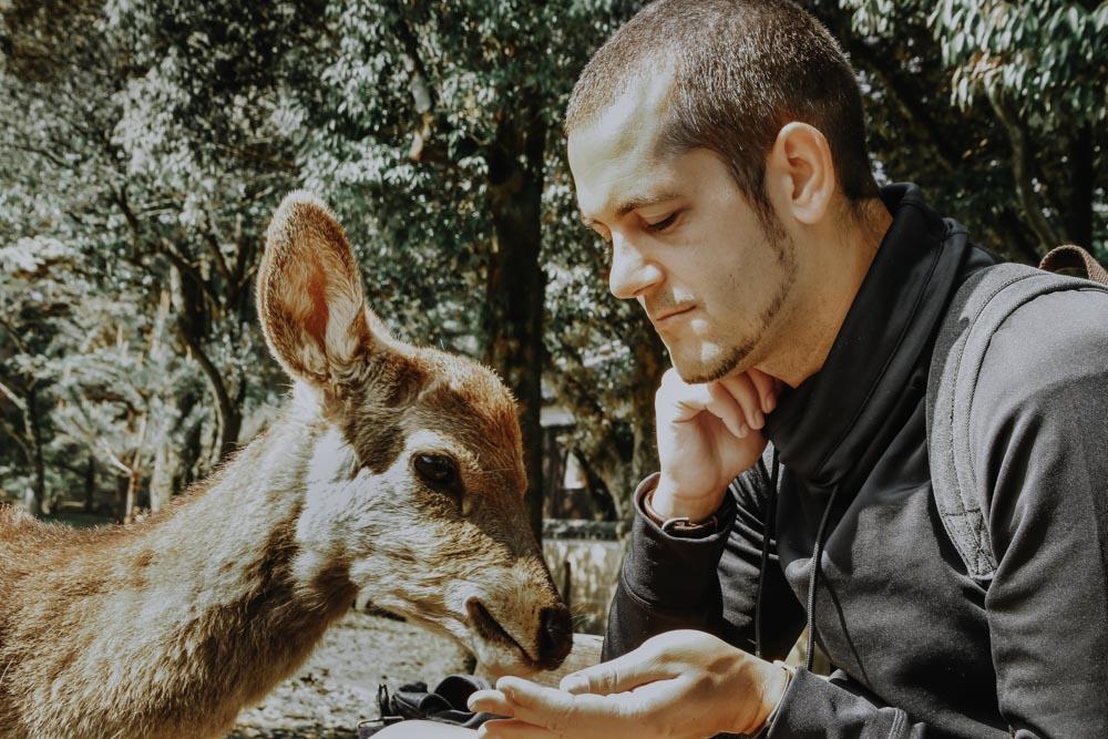 Nara's Deers im Nara Park in Japan