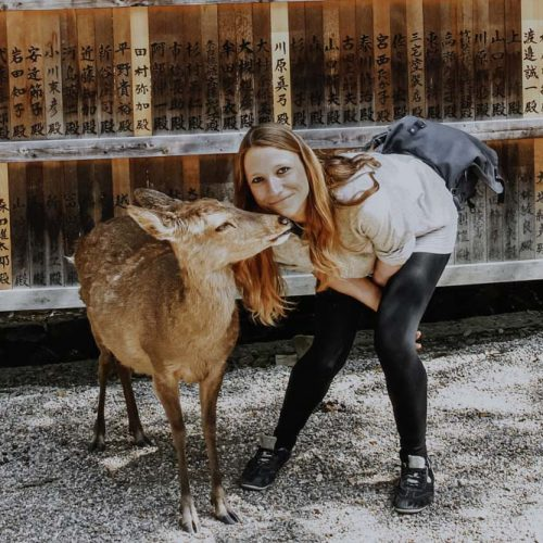 Nara's Deers und der Nara Park in Japan