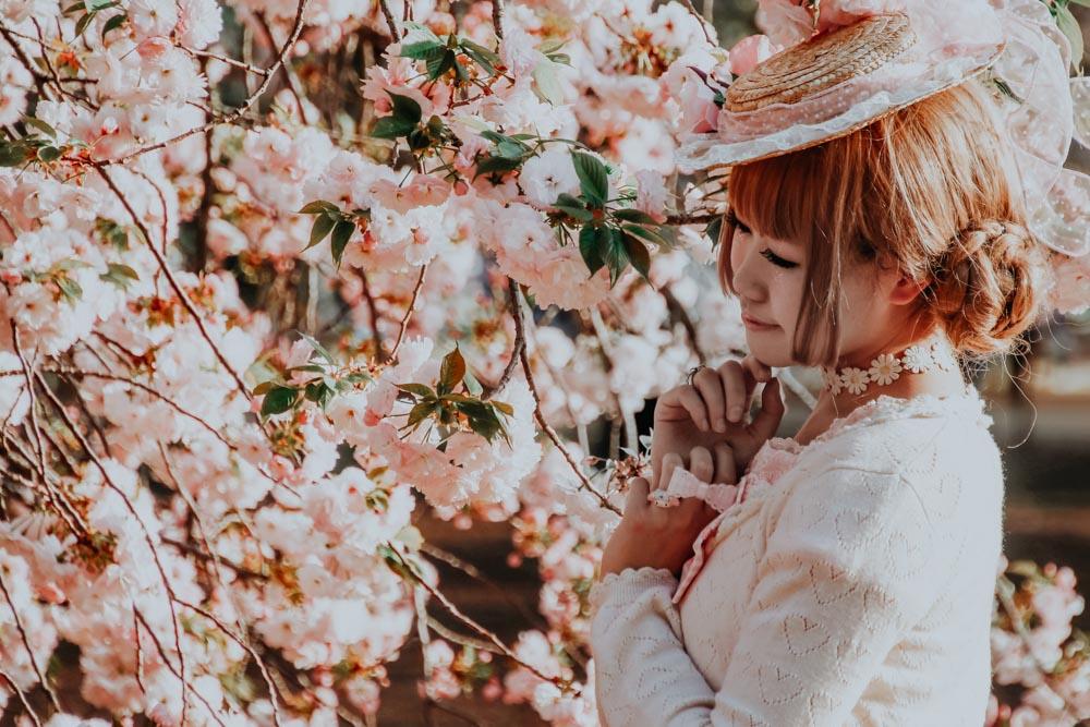 Kirschblütenparks in Tokio