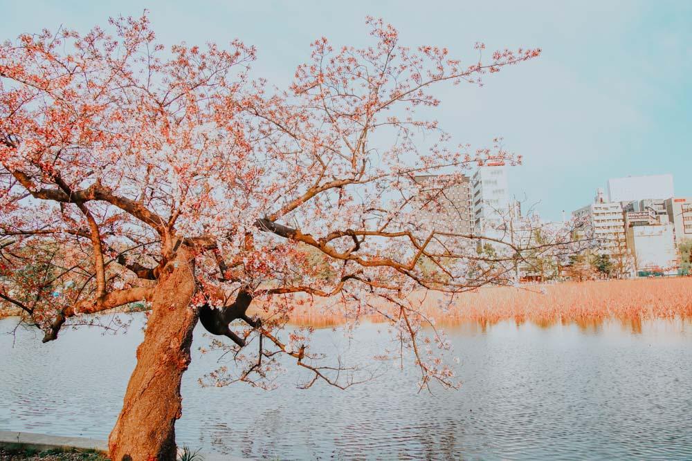 See im Ueno Park in Tokyo