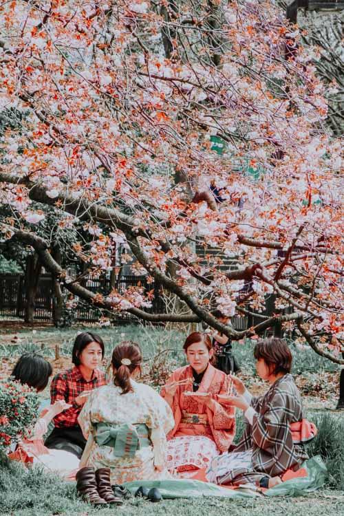 Hanami im Yoyogi Park in Tokio