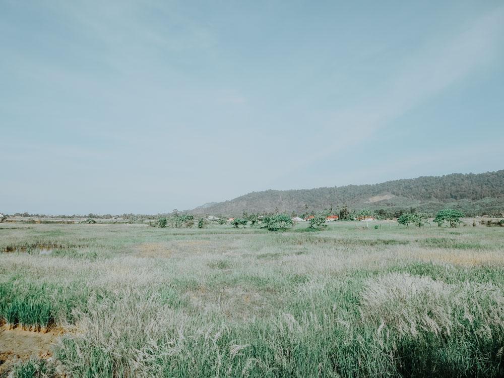 Reisfelder auf Langkawi