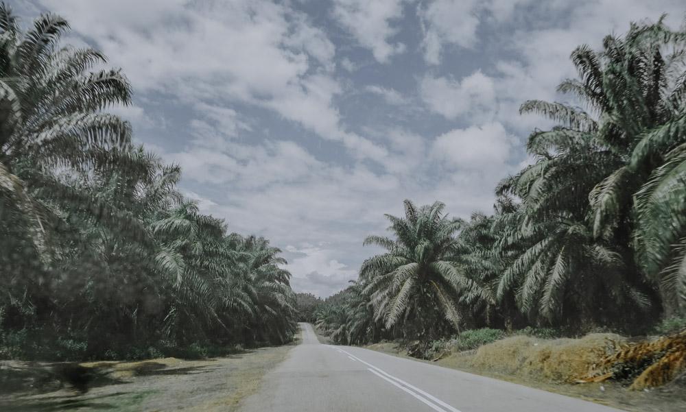 Weg nach Taman Negara
