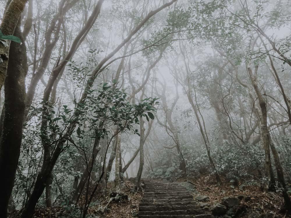 Regenwetteraktivitäten in Taipeh - Wandern im Yangmingshan National Park