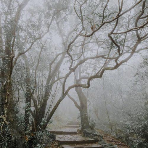 Bäume entlang des Mount Qixing Trails in Taiwan