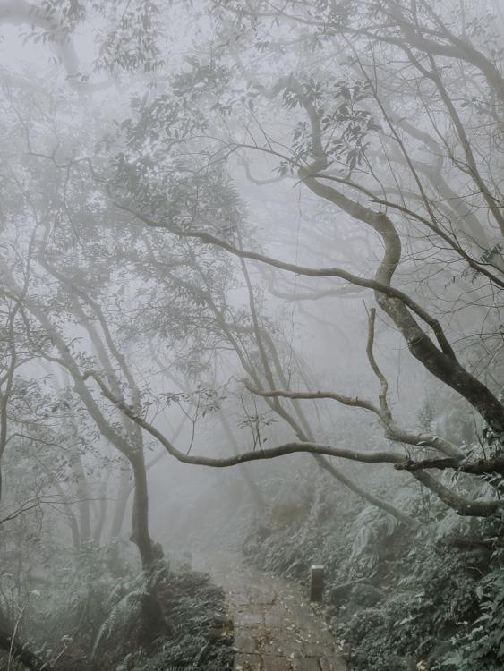 Trail zum Qixingshan bei Nebel