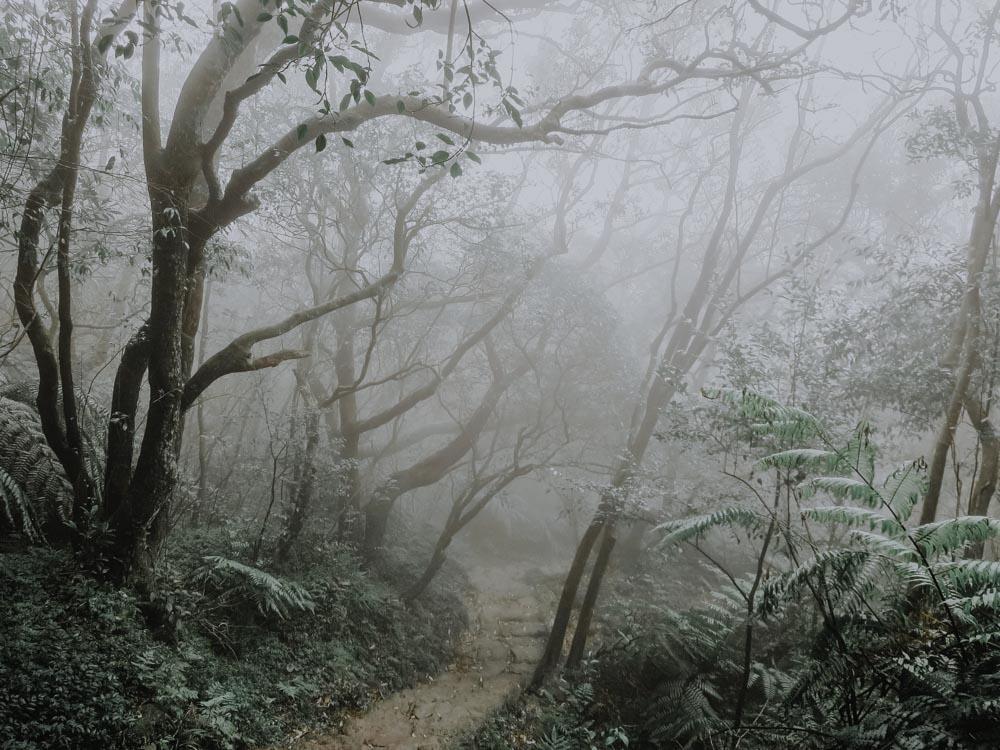 Regenwetteraktivitäten in Taipei - Yangmingshan National Park