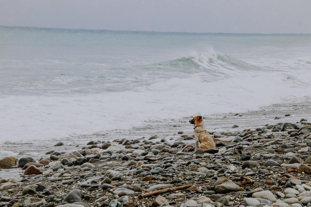 Hund, der auf sein surfendes Herrchen wartet