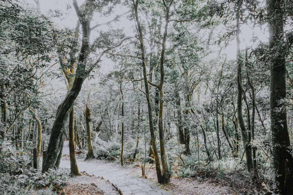 Trail zum Qixingshan in Taiwan