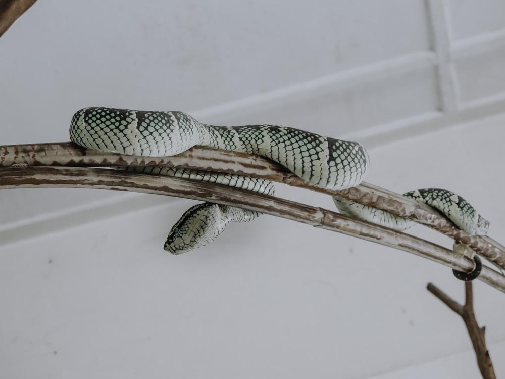 Snake Temple Malaysia