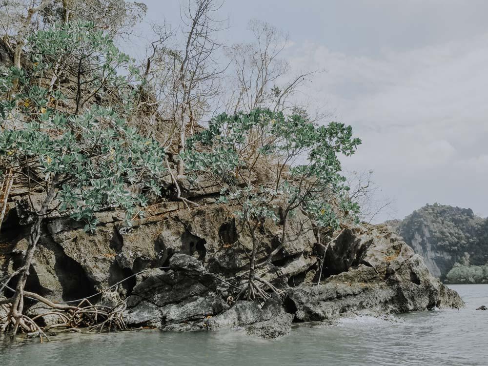 Kilim Geoforest Park auf Langkawi