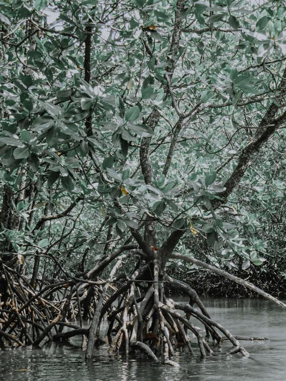 Kilim Karst Geoforest Park Malaysia