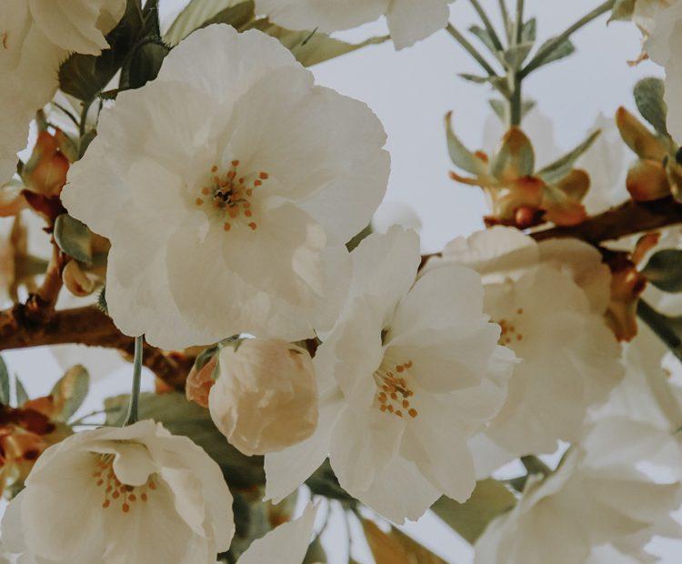Die schönsten Kirschblüten-Spots in Tokio